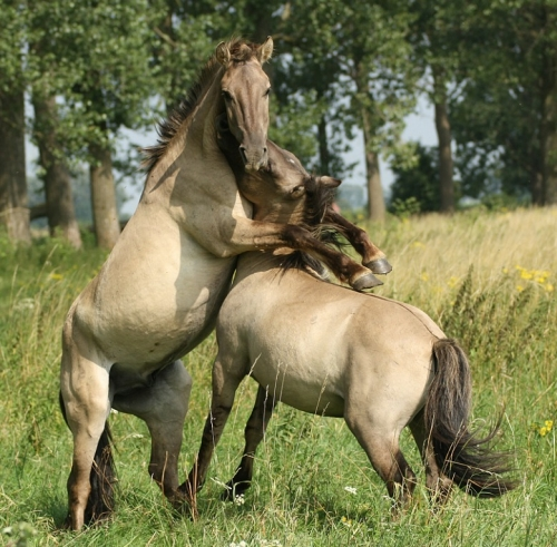 люди рожденные под знаком лошади