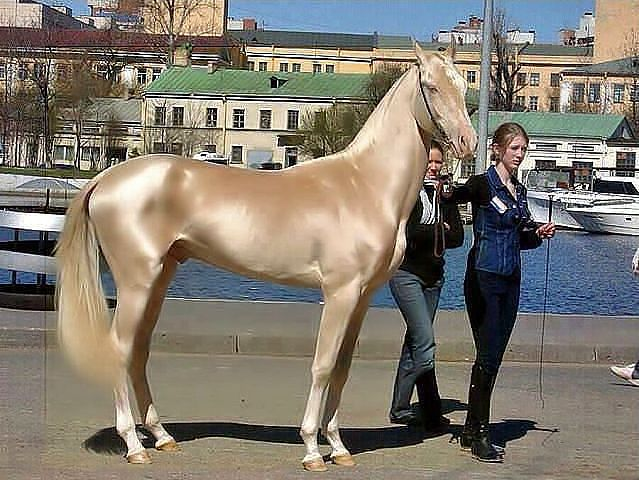 лошадь секс собака: