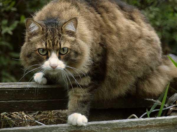 Кот водолей какой он