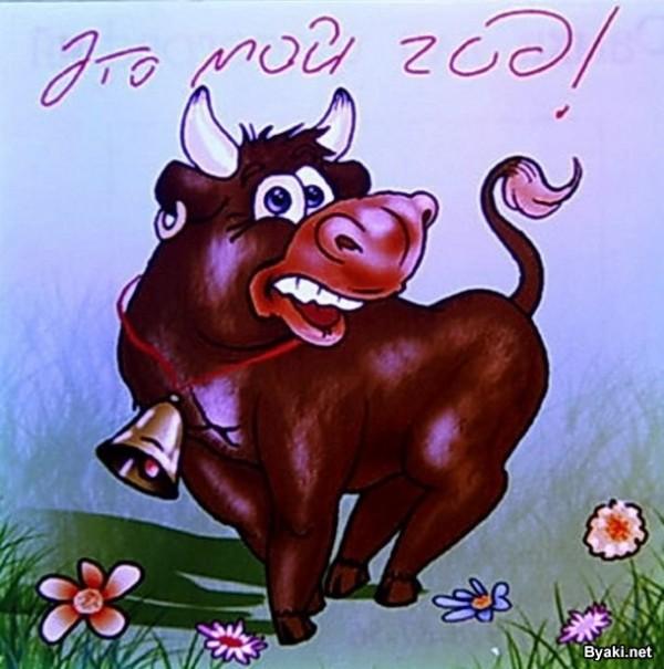 Поздравления быка